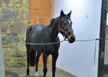 Equestrian Hotel