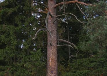 Dirvonai Pines