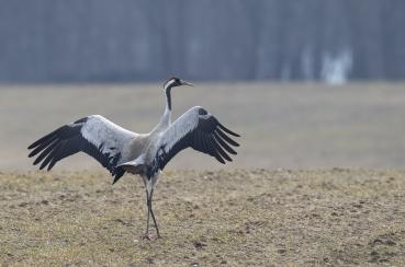 Paukščiai – pavasario pranašai