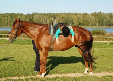 Therapeutic Riding for Children and Adults