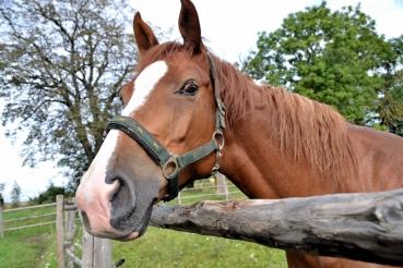 Arklio diena Gyvajame žirgo muziejuje