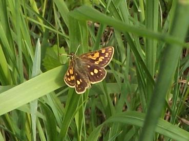Vijuolių entomologinis draustinis